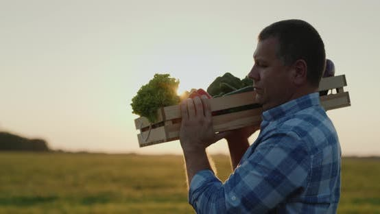 Thumbnail for Mature Farmer Carries on the Shoulder a Box of Vegetables at Sunset