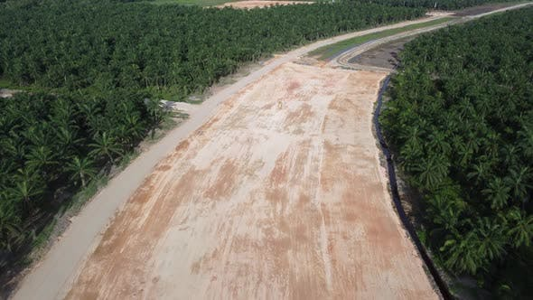 Aerial view deforestation of oil palm tree