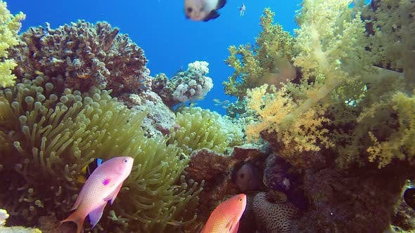 Thumbnail for Red Sea Anemone and Colorful Seascape