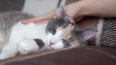 Play with a Sleeping Cat