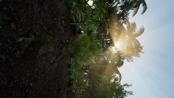 Thumbnail for Tropical Green Forest View with Sun Flare in Morning