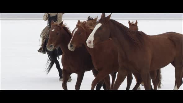 Thumbnail for Slow motion wide screen of horses running by cowboy