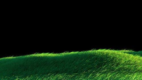 Blowing Grass Loop