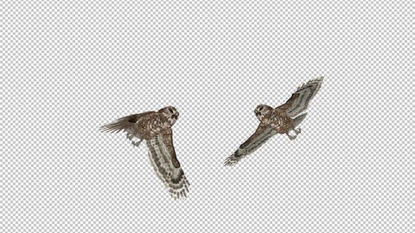 Eule - Gepunktet - Fliegender Übergang IV