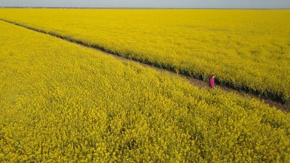 Thumbnail for Pretty Girl Walking Among Yellow Rape Fields - Aerial View. Hair Is Waving in the Wind