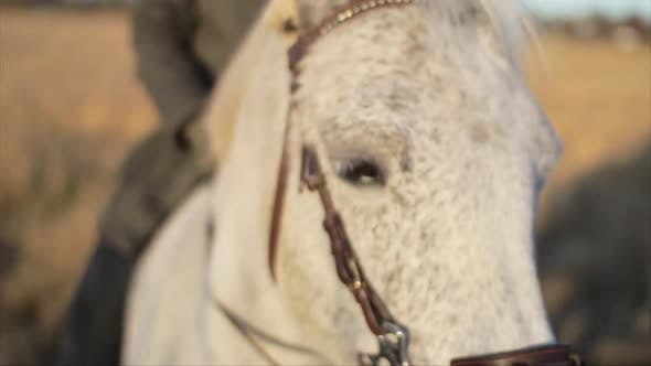 Thumbnail for A close-up macro shot of the face and head of a white horse being ridden by it's owner.