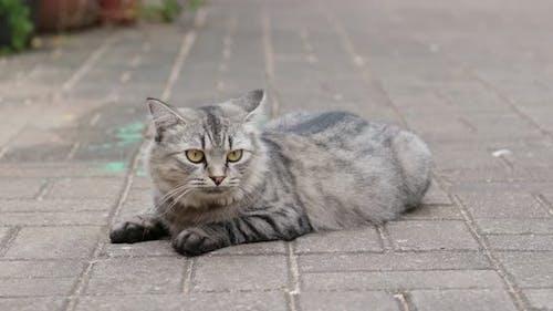 Straße Katze sitzen auf dem Boden