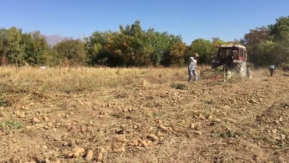 Removing The Tractor Potato