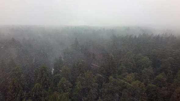 Thumbnail for An Aerial View of an Endless Coniferous Forest in a Snowfall