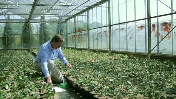 Thumbnail for Scientist examining flora in a greenhouse