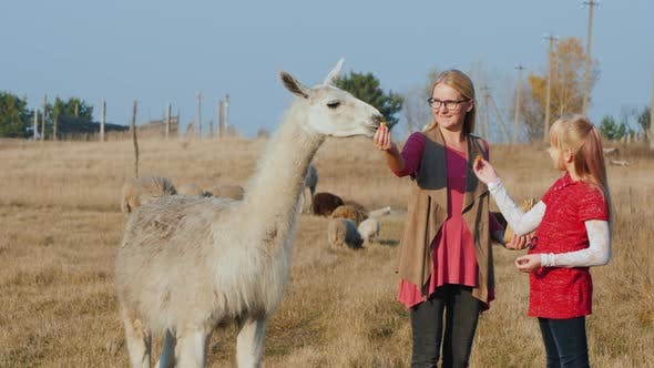 Thumbnail for Mom and Daughter Walk in the Park, Feed Cute Alpacas