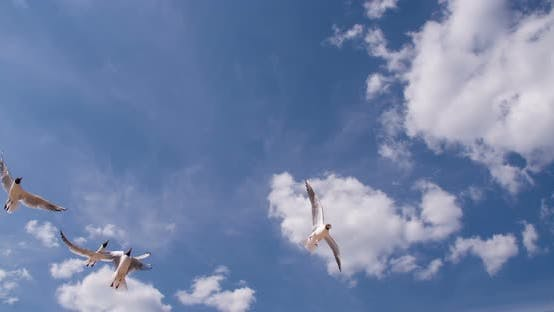 Thumbnail for Beautiful Seagull In The Blue Sky