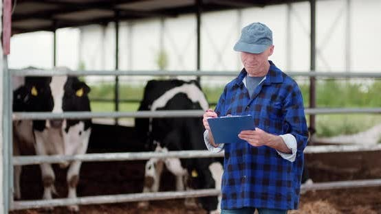 Cover Image for Agriculture Farmer Working on Cowsheed