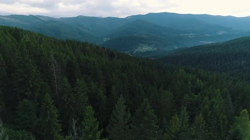 View From a Height of a Mountain Forest