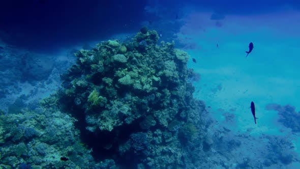 Thumbnail for Footage of Beautiful Ccolorful Coral Reef in the Red Sea. Amazing Underwater Life