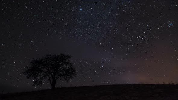 Thumbnail for Starry Sky with Milky Way Moving over Old Tree Silhouette