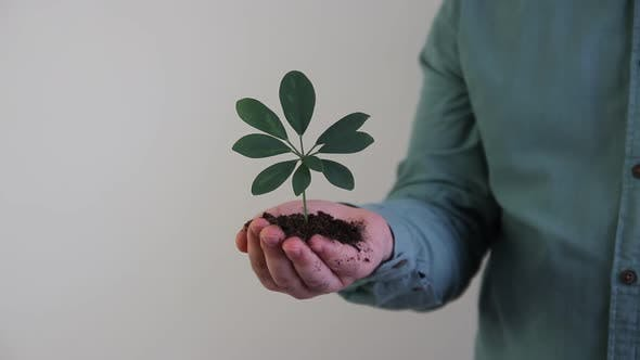 Handful of Soil Young Plant