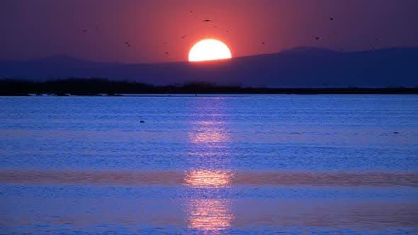 Sunset In Twilight Seagulls Flying