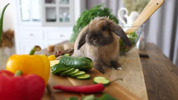 Thumbnail for Rabbit Eating Fresh Salad On Kitchen. Healthy Eating Concept.