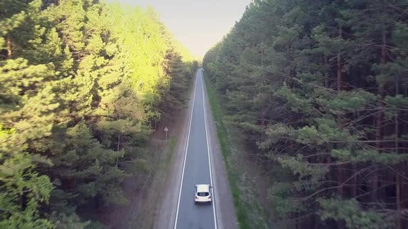 Thumbnail for Sun Rays Light Pine Trees and Car Drives Along Road
