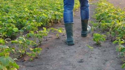 Farmer's Shoes Walking on the Field Slow Motion
