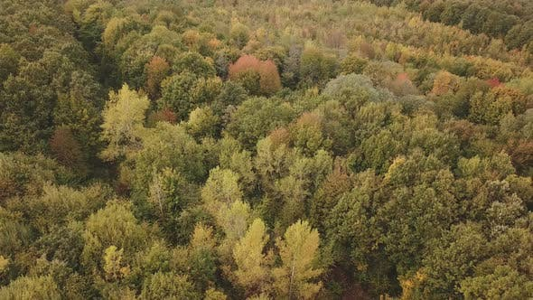 Thumbnail for Autumn Forest Aerial View