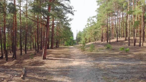 Thumbnail for Pine Forest Footpath