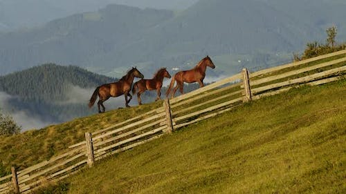 Herd of Mustang Horses Gallop Through Sagebrush, Meadows, and Trees in the Foothills of the Mountain