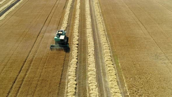 Thumbnail for Aerial Drone Footage. Front View Combine Harvester Gathers the Wheat. Harvesting Grain Field