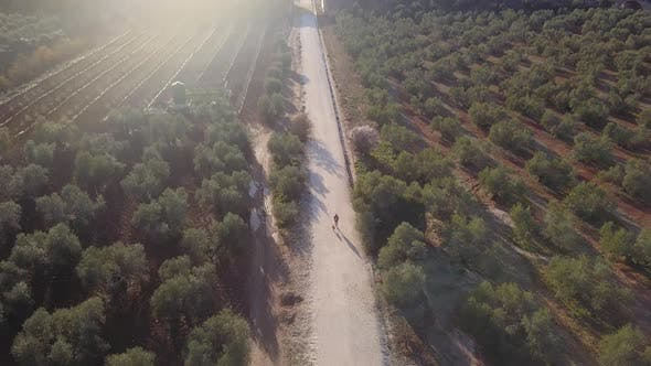 Thumbnail for Teen walking with his dog on a path among olive trees