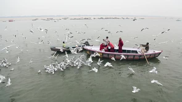 Thumbnail for Ganges River in Varanasi, India. People on the Boat Feed a Lot of Seagulls.