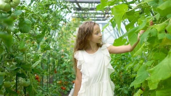 Thumbnail for Adorable Little Girl erntet Gurken und Tomaten im Gewächshaus.