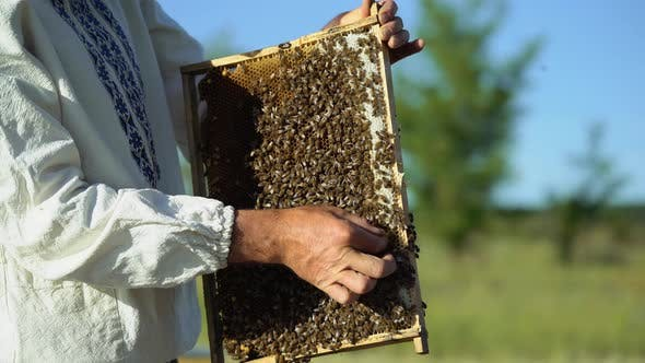 Thumbnail for Frames of a Bee Hive
