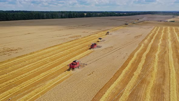 Thumbnail for Beautiful view of the yellow field with harvester machinery