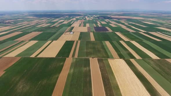 Thumbnail for Aerial View on Multicolor Agriculture Fields
