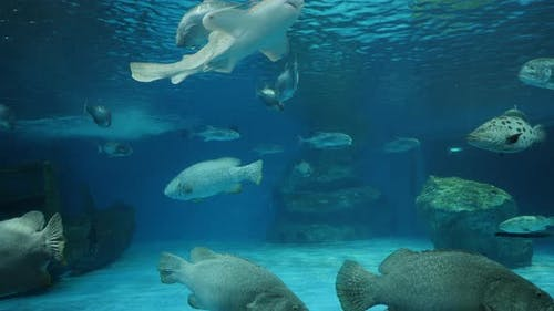 Underwater ocean waves with fish and sea life