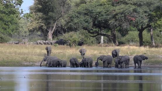 Thumbnail for African elephant, Namibia, Africa safari wildlife