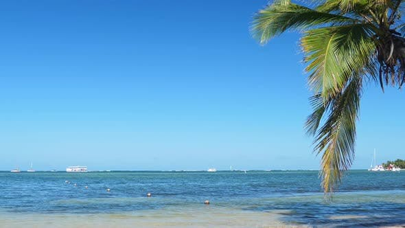 Thumbnail for Coconut Palm Tree on Tropical Shore