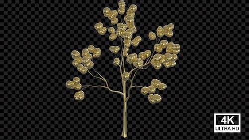 Growing Golden Sphere Tree 4 K