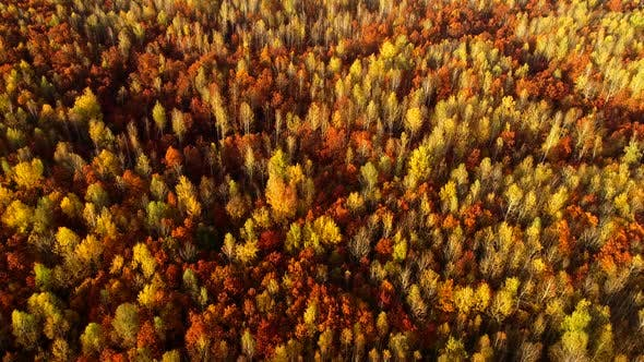 Thumbnail for Autumn Colors of Nature