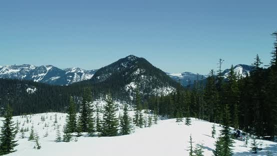 Thumbnail for One Person Snowmobiling In Evergreen Forest Aerial Shot Following Behind Rider