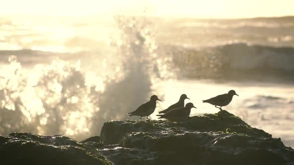 Cover Image for Bird on the Rock