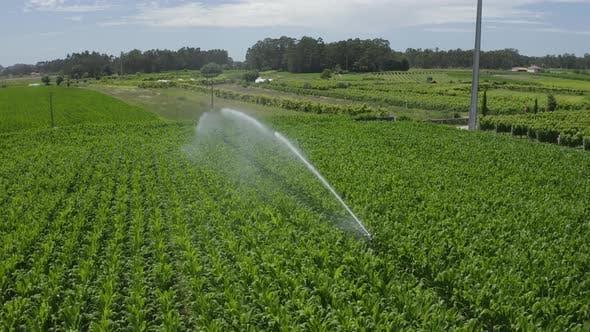 Thumbnail for Corn Irrigation System Plantation