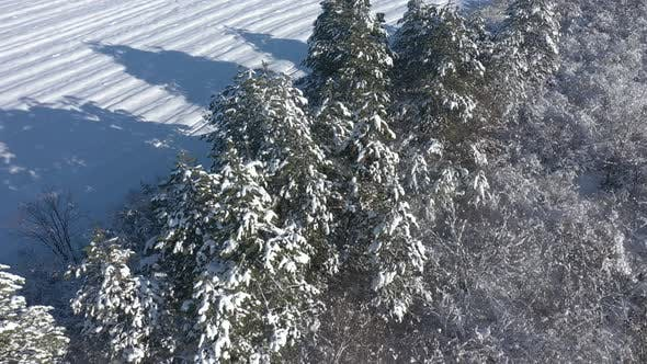 Thumbnail for Slow flight above the coniferous tree shadows on snow 4K drone video