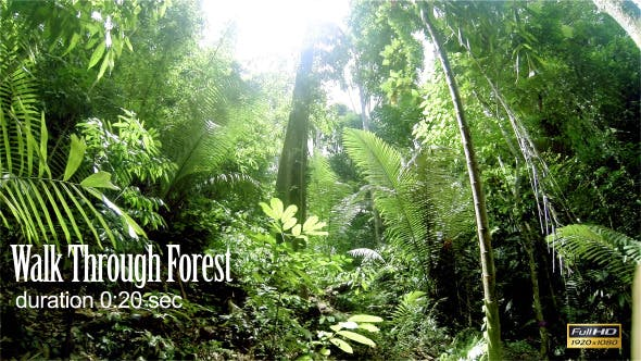 Thumbnail for Walk Through Forest