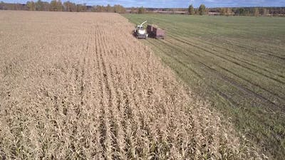 Aerial View Forage Chopper Pours Corn Mass Into Trailer