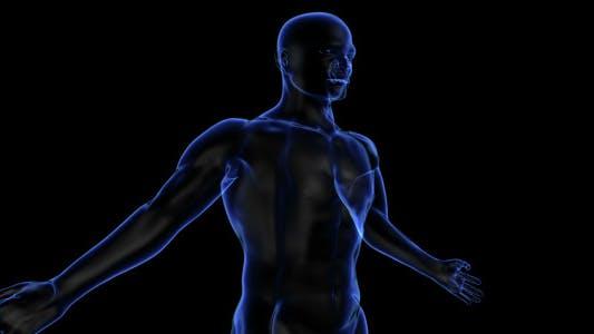 Thumbnail for Human Body