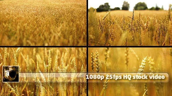 Thumbnail for Wheat Field Pack (4 shots) 1