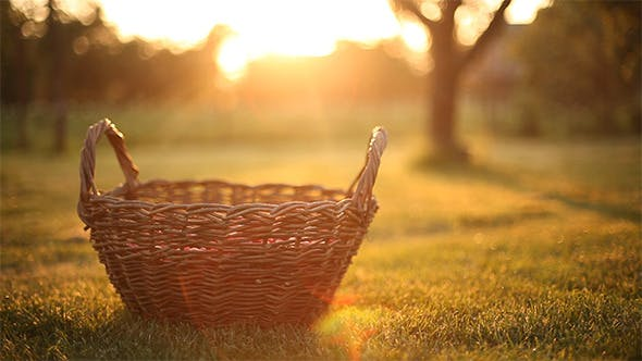 Cover Image for Sliding Around Basket In The Garden