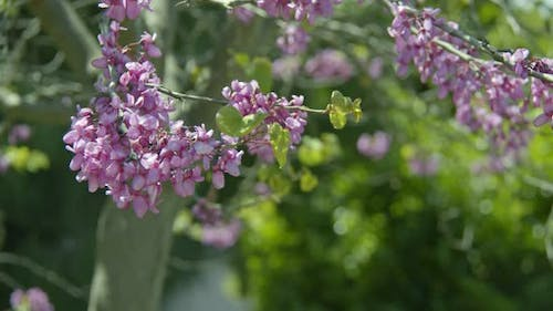Lovely Spring Flowers In Nature 5